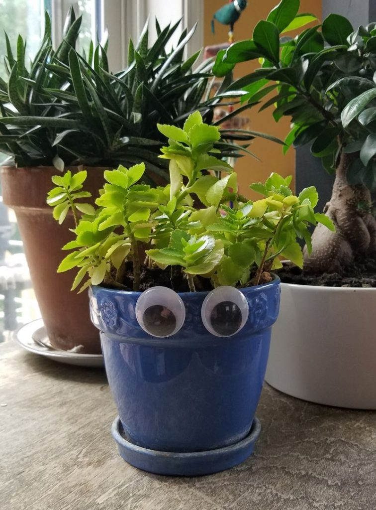 Wiggly eye house plant