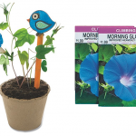 Grow Your Own Morning Glories – Garden Craft Kit