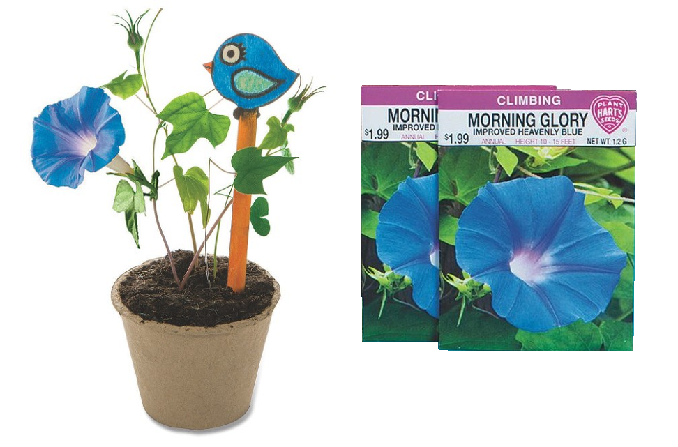 morning glory craft kit