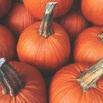 Pumpkin Themed Activities For National Pumpkin Day