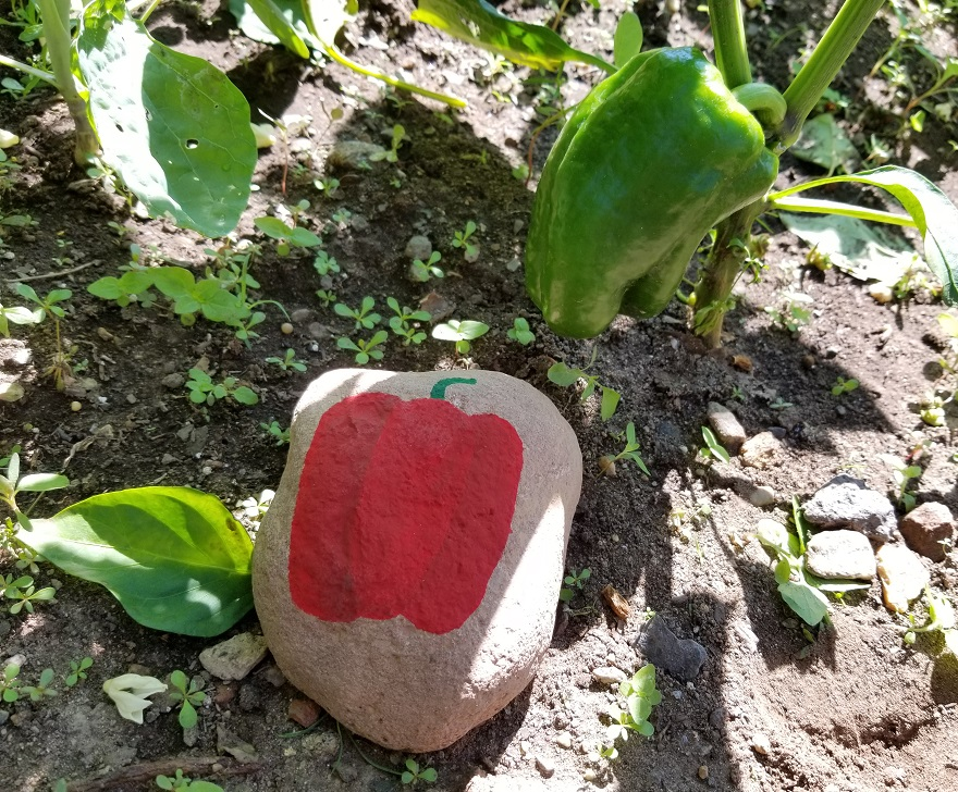 peppers vegetable garden