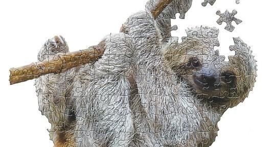 zoo animal sloth puzzle
